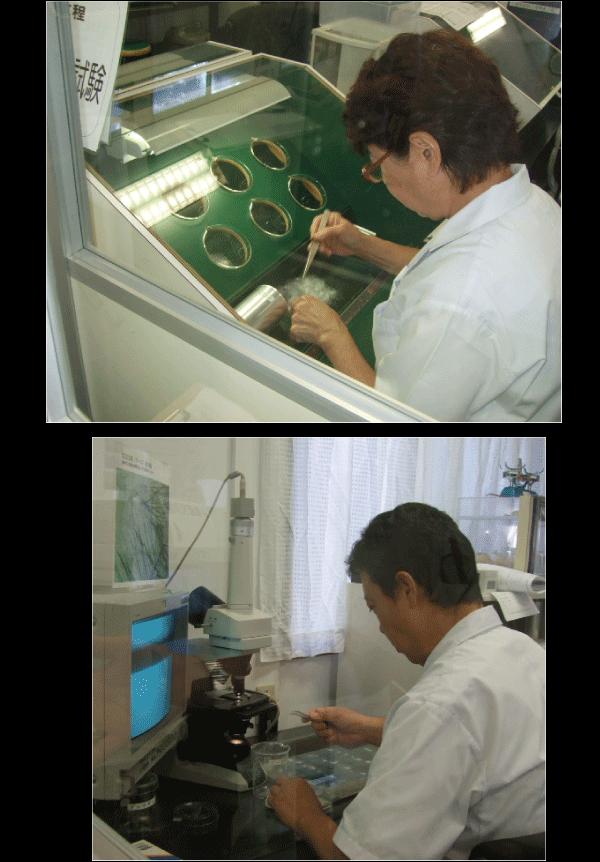 西川羽毛品質検査